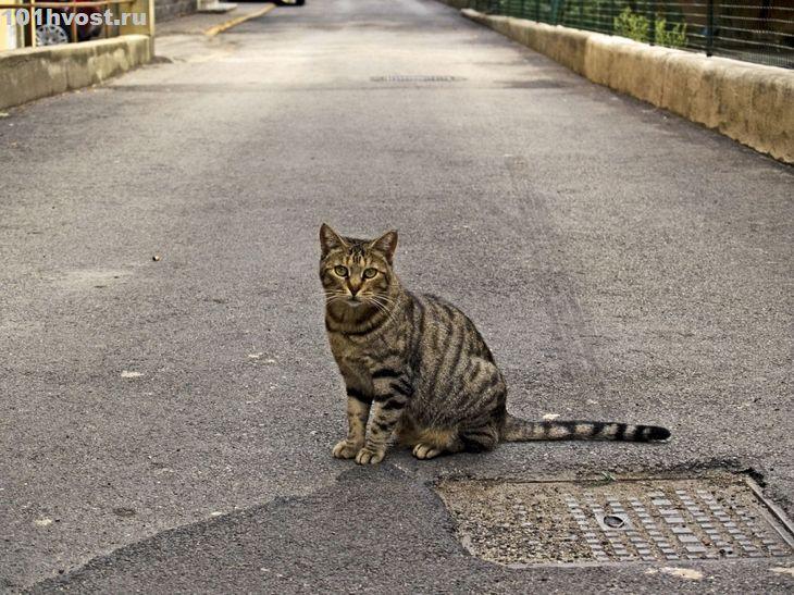 Как кошки чувствуют скорую смерть человека - Кликабол. Всё самое интересное - здесь - медиаплатформа МирТесен