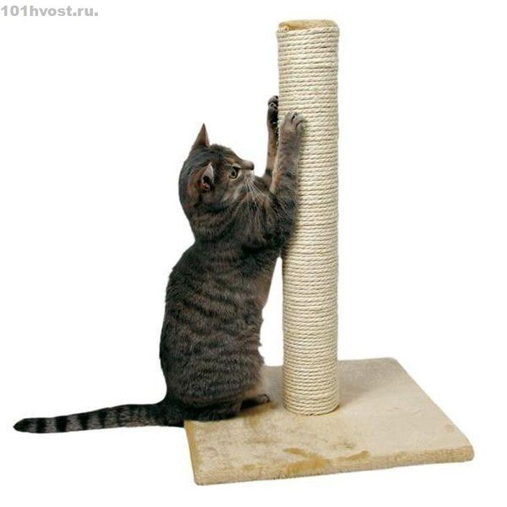 У кошки когтей сколько: норма, функции, как ухаживать